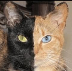 Ro Cat