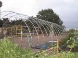 Hoop house 4