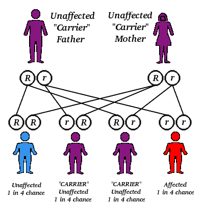 Autorecessive genes