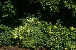 12508030@N06_7202714382_TPN gardens 043