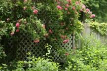 12508030@N06_7203025466_TPN gardens 019