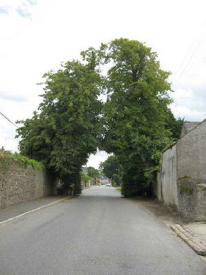 The Twin Trees, Ballinakill
