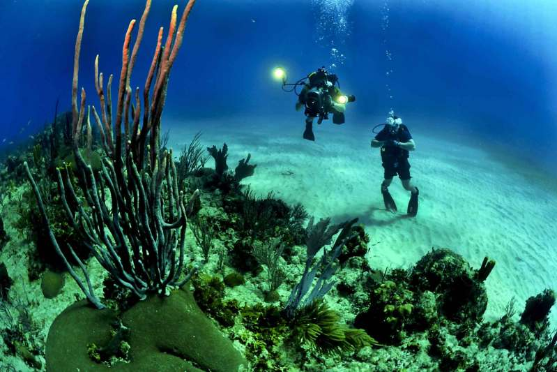 Coral divers wearing watches underwater