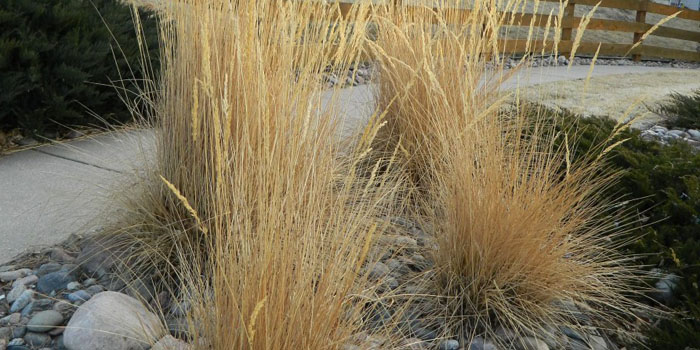 cut back grasses during spring clean up