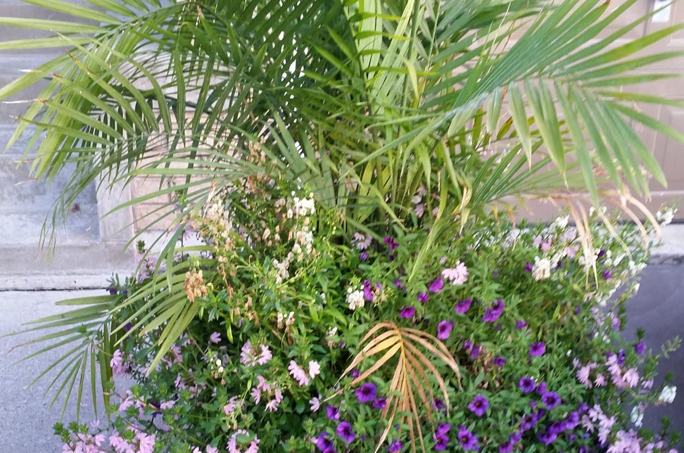 summer pot with palm