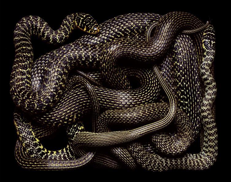 black-and-yellow-snake-art