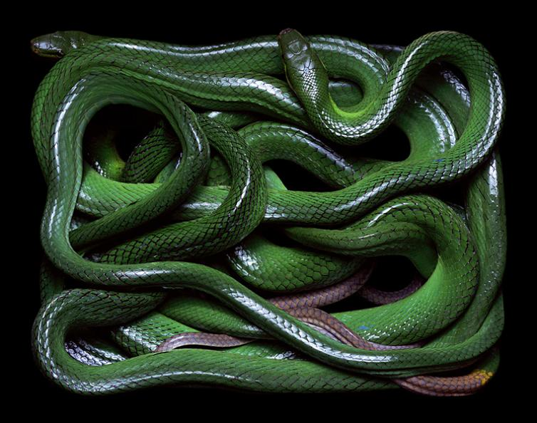 snake-skin-art-vibrant-colors-by-guido-mocafico