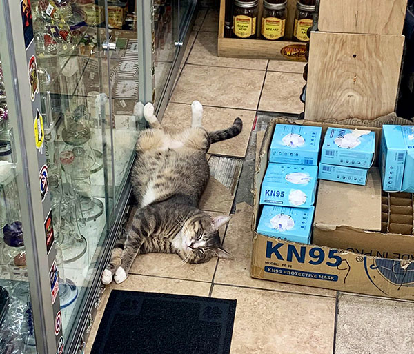 best of bodega cats twitter 4 This Twitter Account is Dedicated to Bodega Cats and Its the Best