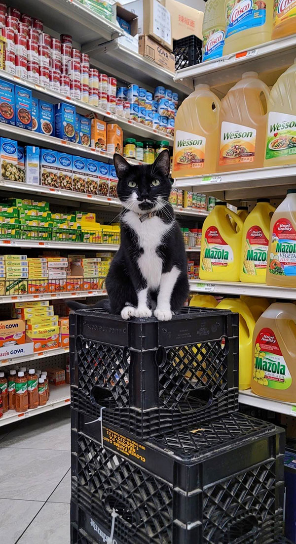 best of bodega cats twitter 8 This Twitter Account is Dedicated to Bodega Cats and Its the Best