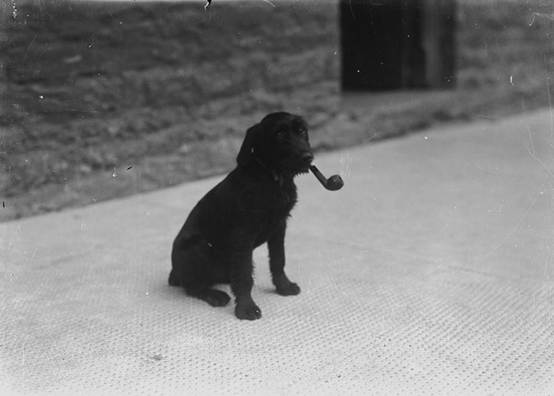 Dog-with-a-pipe-in-its-mouth