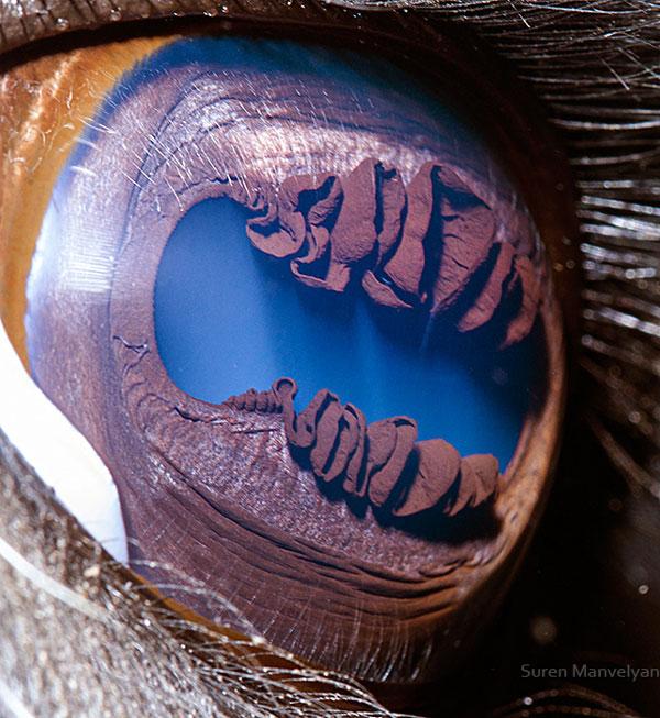 llama-close-up-of-eye-macro-suren-manvelyan