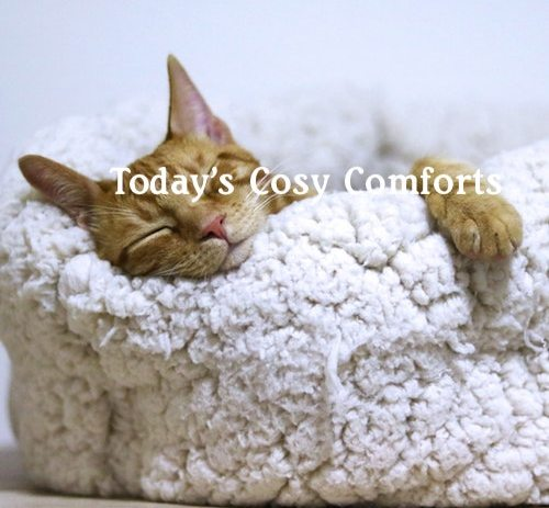 Playlist: Today's Cosy Comforts