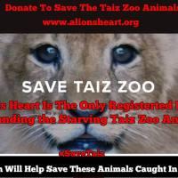Help A Lions heart #SaveTaiz Zoo animals. Please donate & share