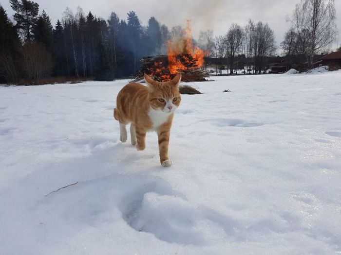 My Sister Took A Pic Of Her Gangster Cat Walking Away After Causing Havoc