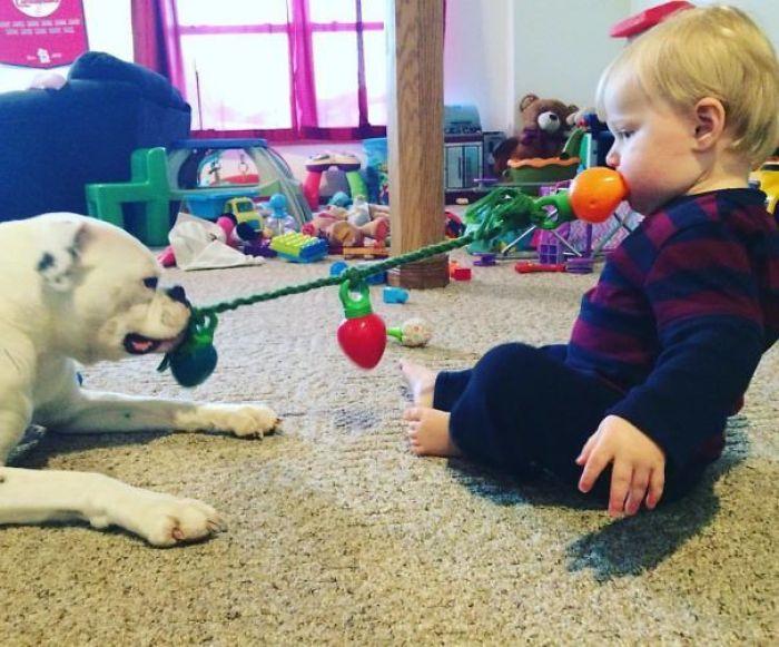 My Nephew Playing Tug-O-War With The Dog