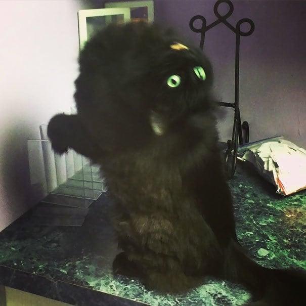 Possessed Cat