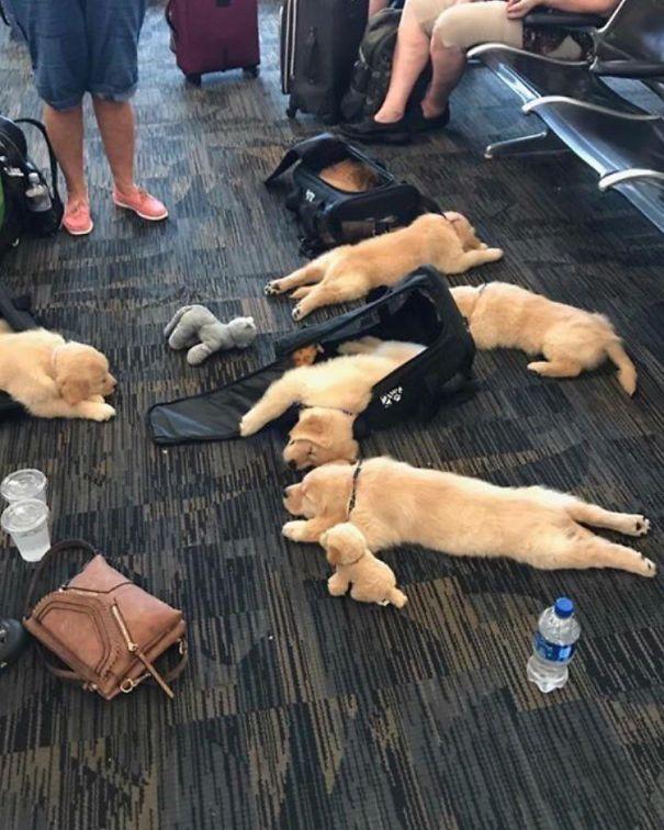 О нет, кто-то пролил все их щенки