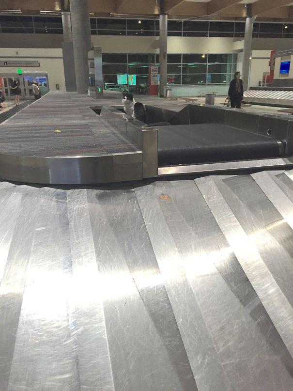 Как я ожидал, чтобы взять мой багаж из аэропорта