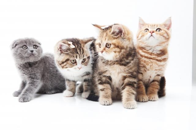 猫の多頭飼いで仲良くならないときの工夫~先住猫ストレス解消のために 画像
