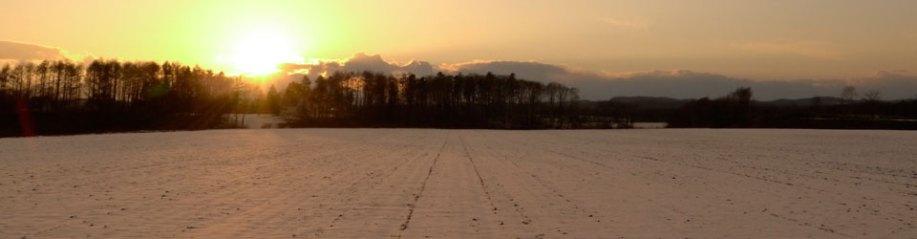 初冬のじゃがいも畑