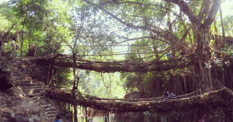 Double-Decker Living Root Bridge Trek, Cherrapunji