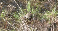 Got to see some critters on the trek. Say hello to Mr. Turtle.