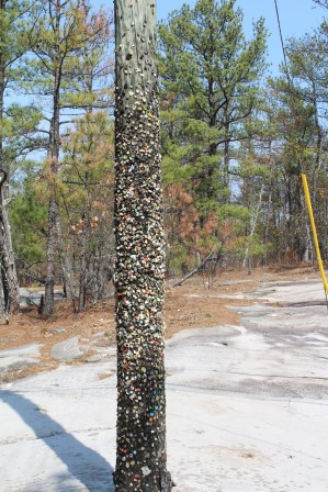 """We also found a """"gum"""" pole on the path up. Similar concept to the world famous """"gum wall"""" in San Luis Obispo, CA."""