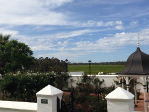 Voyager Estate rose gardens with grape vines in every direction beyond