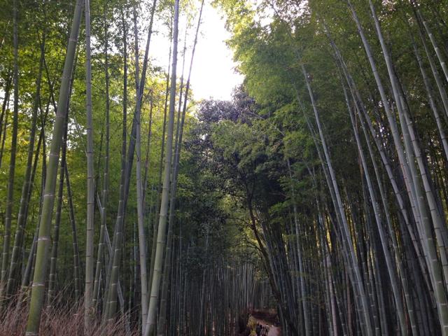 Kyoto35