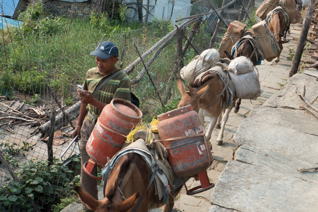 Donkeys are the main means of transporting supplies since there are no roads.  Notice the guy on his mobile phone.