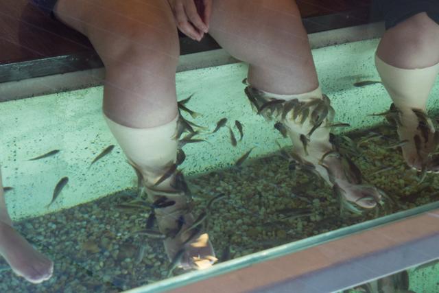 We had never heard of a fish massage.