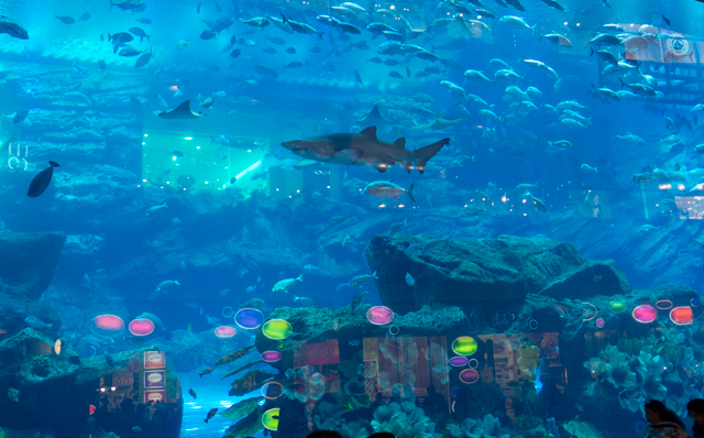 One of the largest tanks in the world, the Dubai Aquarium is located inside the Dubai Mall. The Dubai Aquarium is home to more than 33,000 living animals, including 400 sharks and rays.
