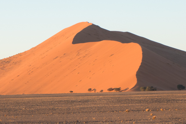 Parts of the southern Namib desert comprises a vast dune sea with some of the tallest and most spectacular dunes of the world, ranging in color from pink to vivid orange. The highest dunes are almost 1,000 feet in height.  All of these dunes are located in the Namib Naukluft National Park.