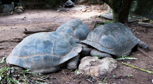 """This arrangement is known as a """"ménages à tortoise""""."""