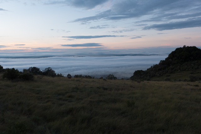 The early morning found the Maasai Mara covered in a blanket of clouds.