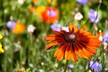 Orange flower.