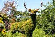 This stag was part of Mother Earth.