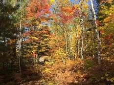 A splendid autumn