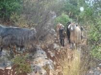 Nossas companheiras em alguns passeios pelas ilhas
