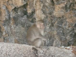 Sempre macacos mas esses maiores