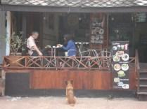 Turístico total. Muito bonito. Café expresso e cachorro olhando