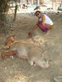 Vida completamente rural. Na rua principal da ilha, criam porcos