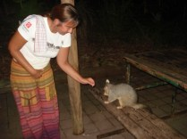 Alimentando o possum