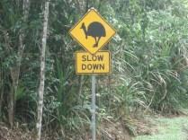 Placa avisando sobre os grandes passáros que cruzam as estradas e não podem ser mortos porque estão em extinção
