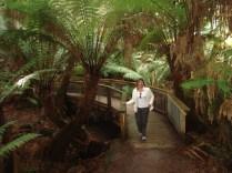 Ottaway Rainforest é uma floresta temperada com árvores altíssimas, ravinas de samambaias e cachoeiras magníficas.