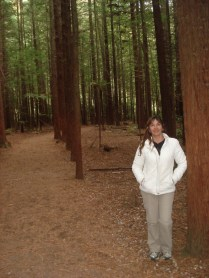 Redwoods – sequoias