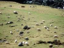 Subindo o morro. Olha a quantidade de ovelhas