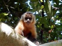 Enquanto Carlos flutuou fui ver os macacos
