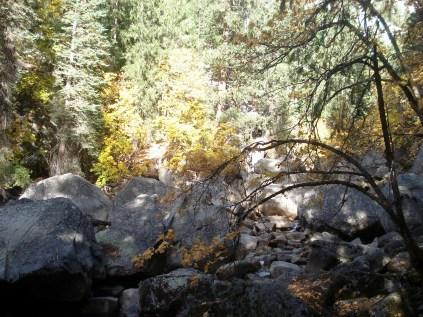 O parque concentra 20% das espécies de plantas da Califórnia