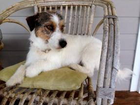 Jones on chair